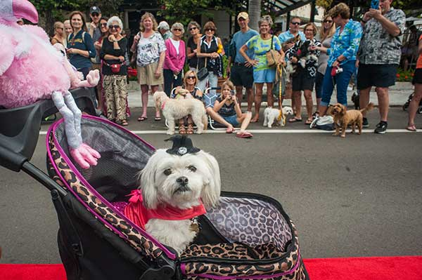 Pet on Third Parade