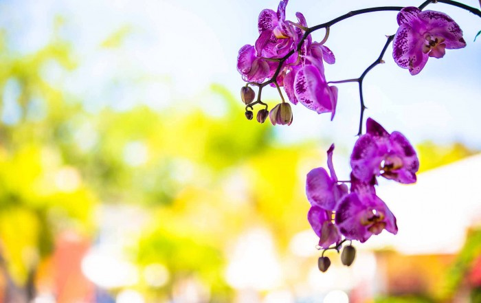 third street south purple orchids