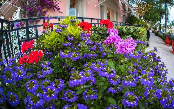 third street south-third in bloom