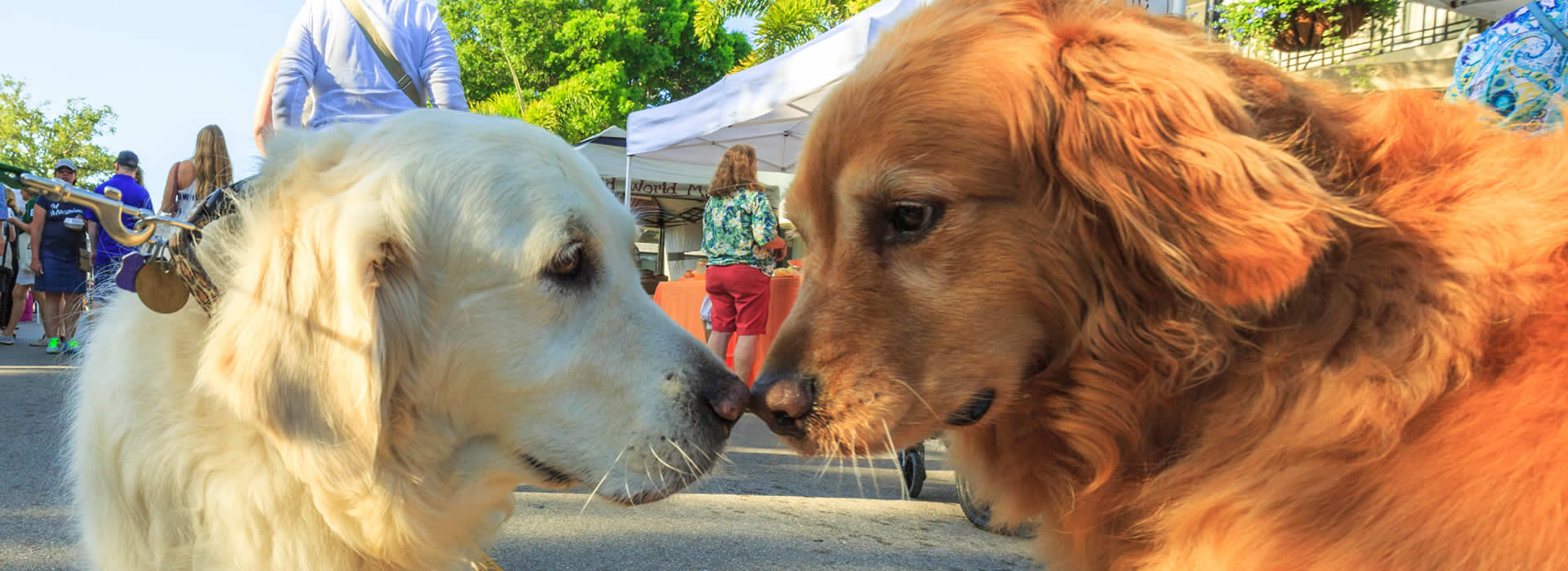 Pets on Third Festival