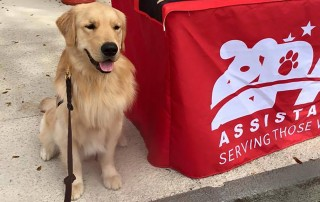third street paws assistance dogs
