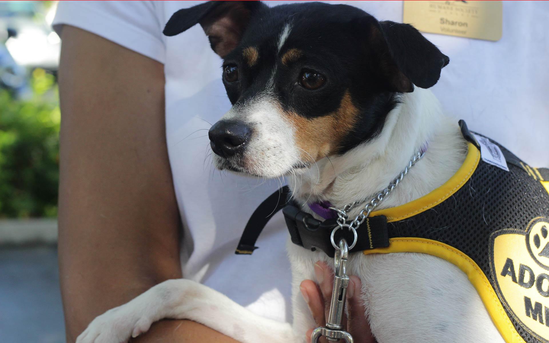 Third Street South Paws Around Town Pet Adoption