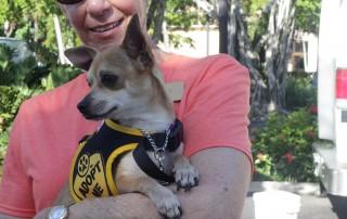 third street south pet adoption - Humane Society