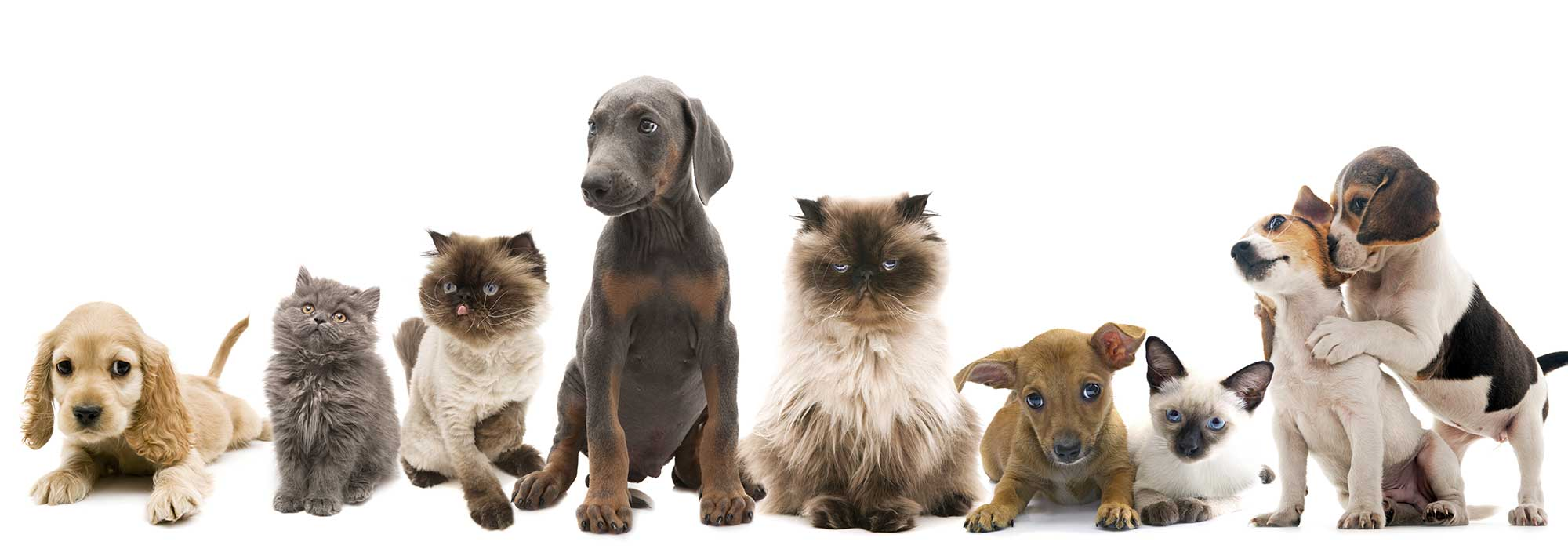pet services naples 5