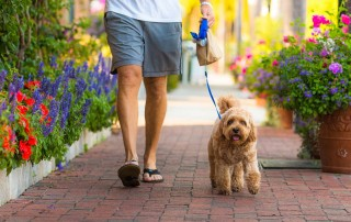 Man walking with small dog