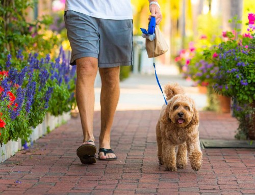 Dog-Friendly Third Street South