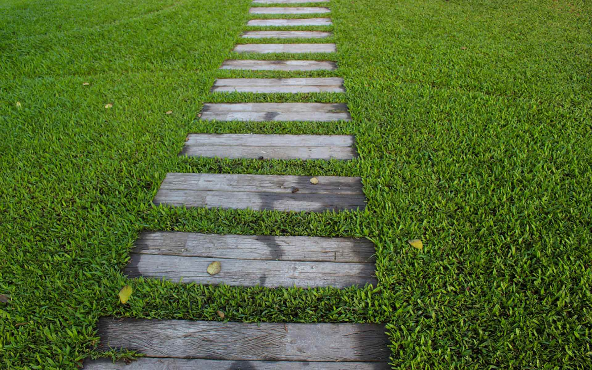Path through green grass